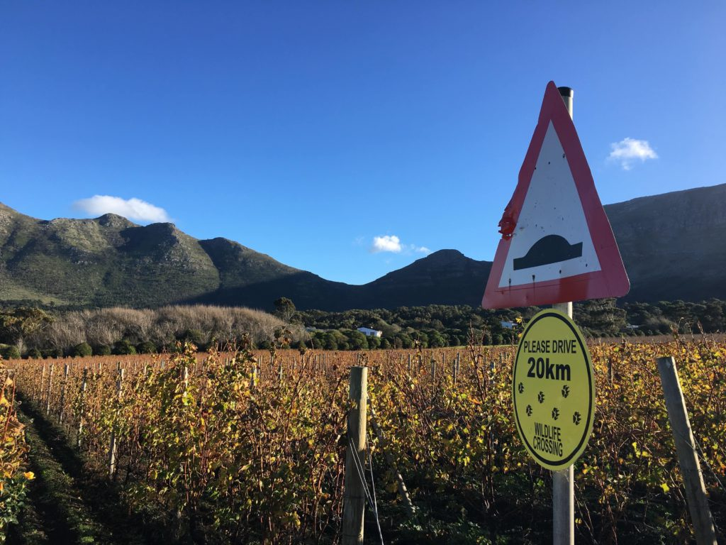 Cape Point Vineyards 03